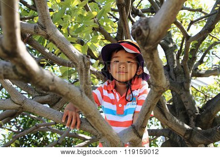 Japanese boy climbing the tree (4 years old)