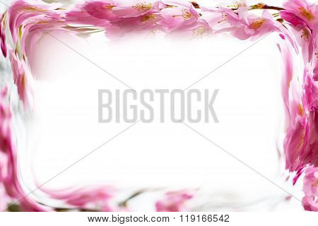 Photo frame background with Beautiful pink cherry blossom, Sakura flowers