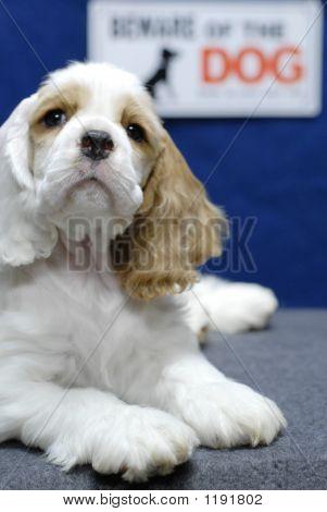 ACS Vorsicht bei Hund open eye