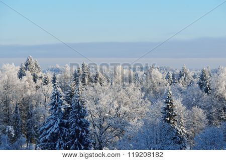 Aerial View Of Snow And Rime Covered Forest