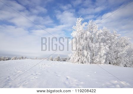 Winter Rural Landscape With A Snow And Rime Covered Trees And A Field