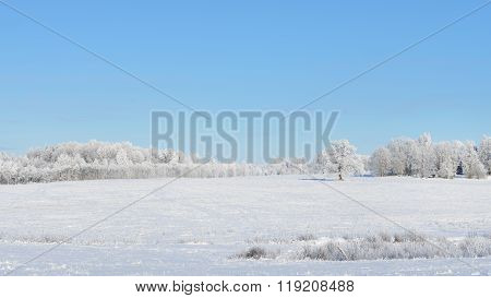 Snow-covered field surrounded by forest on a clear winter day