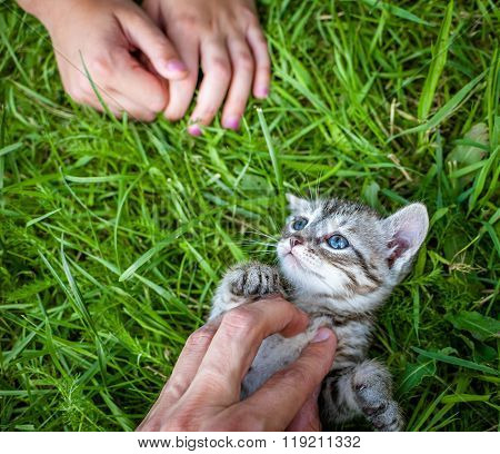 hand patting kitten