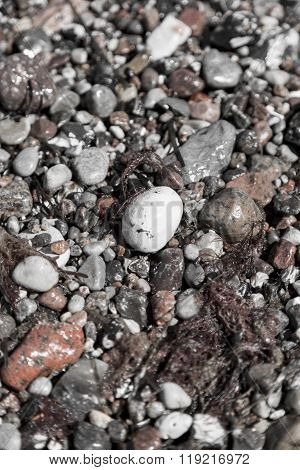 Some Wet Pebbles At The Beach