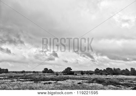 Bw Hdr Shot Of Hiddensee Heath With Cloudscape