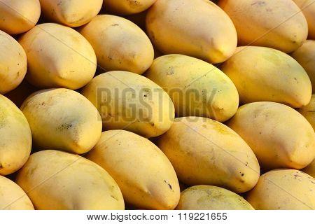 Golden Ripe Mangoes