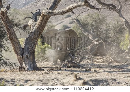 Elephant in the Kunene Region of Namibia ** Note: Visible grain at 100%, best at smaller sizes