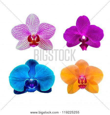 Orchid Isolated On Background.orchid Set.spa Flower.