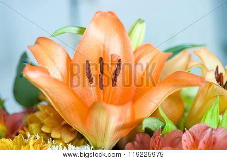 Detail Of Orange Lilly