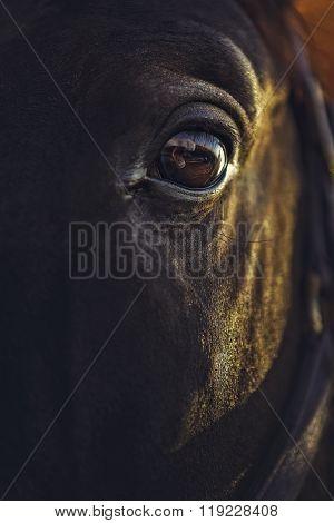 Alert Horse Eye