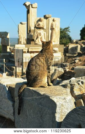 A Cat Looking At Ephesus Ruins