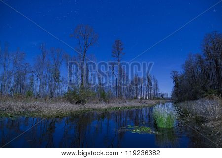 Night scene with stars in the Okefenokee swamp of Georgia