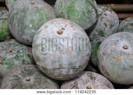 White Gourd, Winter Gourd