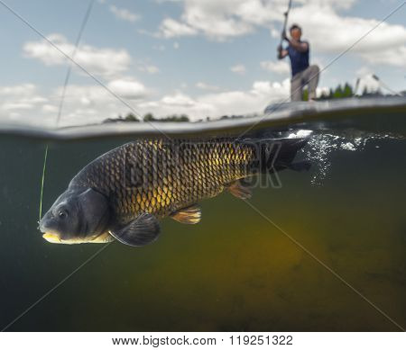 Split shot of the man fishing on the lake with underwater view of the fish. Focus on the fish only