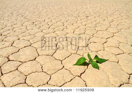 Fresh green vegetable coming to life on cracked desert ground
