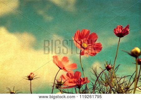 Vintage cosmos flower - paper art texture nature background