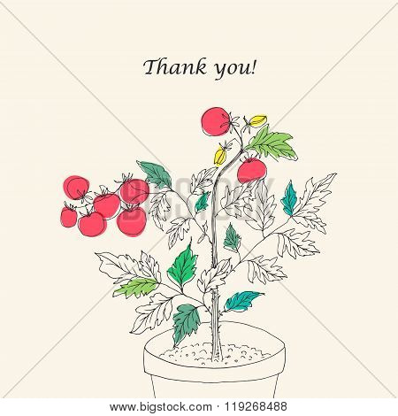 Vector Floral Card With Cherry Tomatoes Plant