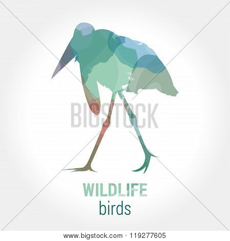Wildlife banner - birds marabou