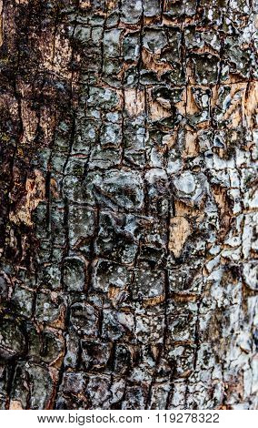 Bark Of Tree.choose A Focal Point In The Center Of The Image.