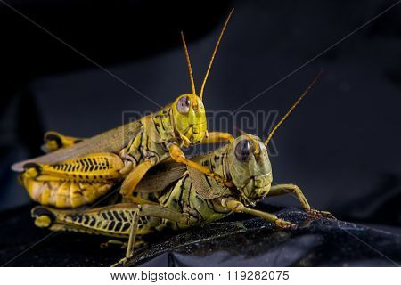 Yellow And Green Grass Mates