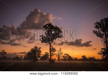 Thailand Isan Surin Landscape Morning