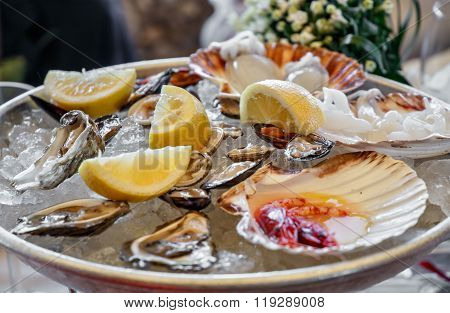 Gourmet Mussels Served With Ice And Lemon Slices. Seafood Menu At Wedding Party