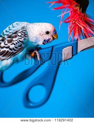 Bird On Scissors