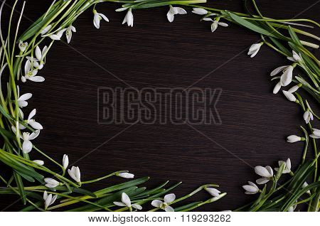 Snowdrops On Wooden Background