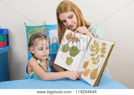 Five-year Girl And Mother Examining Herbarium Shows On One Sheet Of An Album