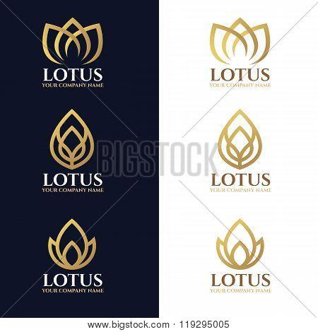 Vector Linegold Lotus Logo Symbols On White And Dark Blue Background Vector Design