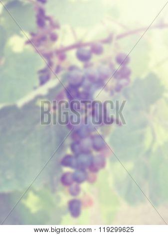 Blur Grape Bunch