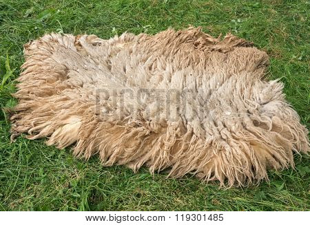 Sheep's skin in a field