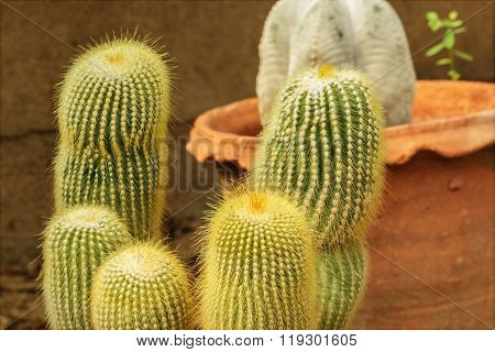 Plants Cactus Desert