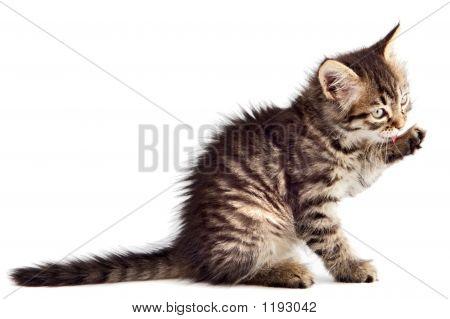 Adorable gato