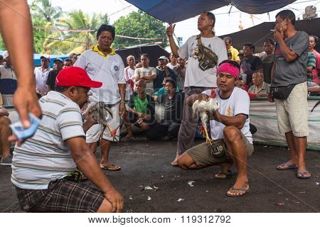 UBUD, BALI / INDONESIA - FEB 22, 2016: Unidentified local people during Balinese traditional cockfighting competition. Cockfights without a religious purpose are considered gambling in Indonesia.