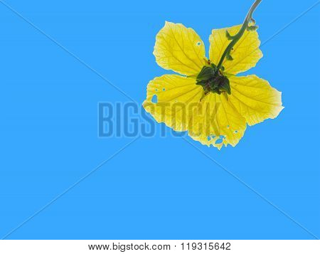 Look Up To Yellow Flower