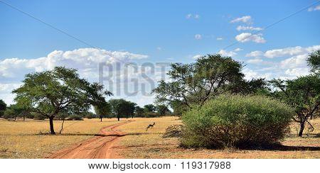The Kalahari Desert, Namibia