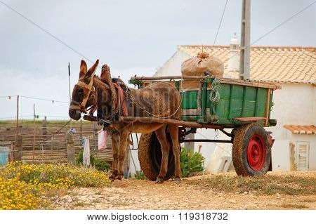 Donkey Cart In The Countryside In Portugal