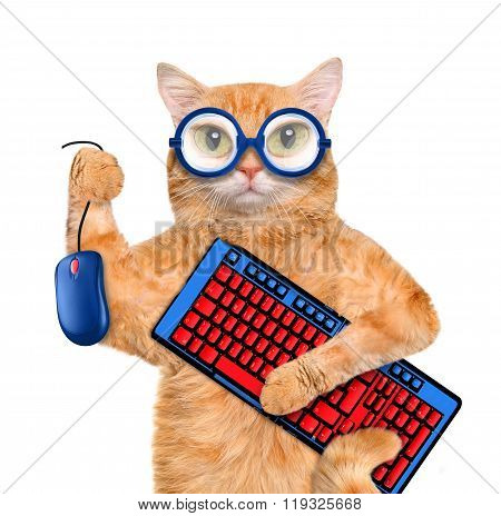 Cat with computer mouse and keyboard.