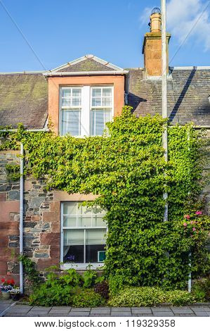 Beautiful Old House Covered With Green Ivy