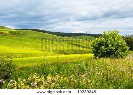 Yorkshire Dales, Landscape In Summer, England, United Kingdom