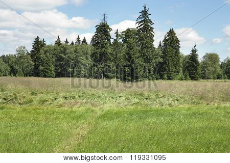 Forest in the Natural Preserve Kladska Peats
