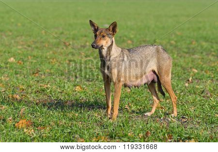 Stray female dog looking in distance with hope