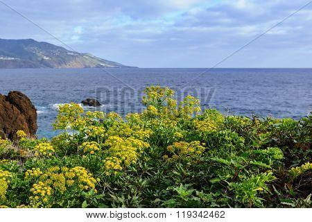 Wild Vegetation On The East Coast Of The Island Of La Palma, Canary Islands, Spain