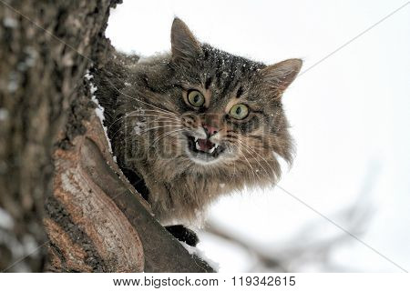 Mewing Cat Sits On A Tree