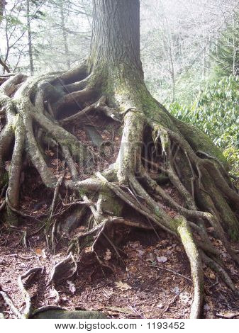 Large Root System