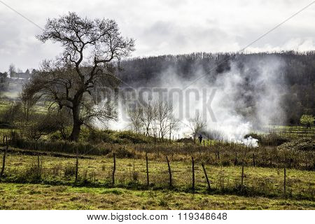 Farmers Burn Wild Bushes In A Foggy Morning. Foggy Farmland And Cypress Trees Country Landscape
