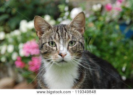 Portrait of cat in garden