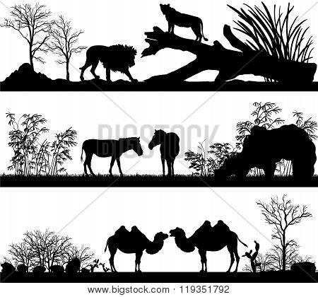 Wild Animals (lion, Horse, Pony, Zebra, Camel) In Different Habitats