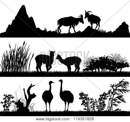 Wild Animals (goat,  Alpaca, Ostrich) In Different Habitats